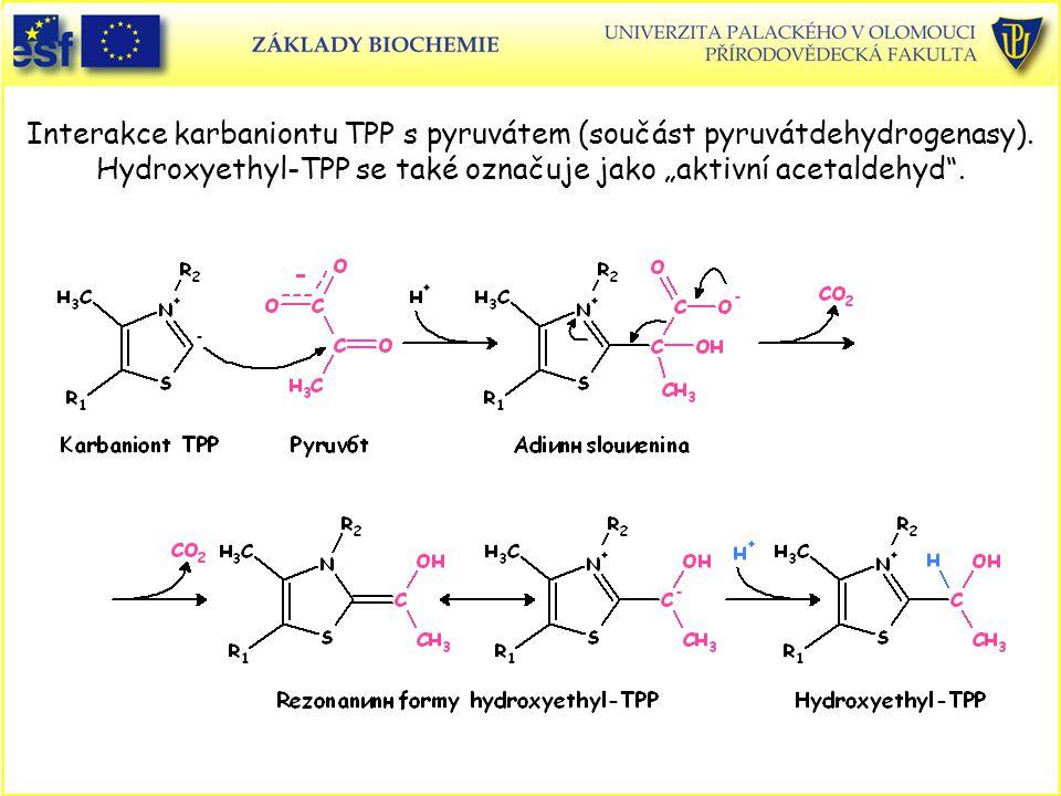 Interakce karbaniontu TPP s pyruvátem (součást pyruvátdehydrogenasy)