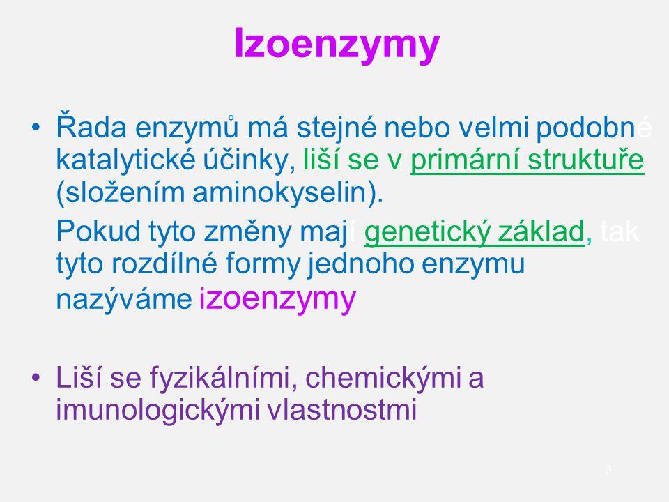 Izoenzymy Řada enzymů má stejné nebo velmi podobné katalytické účinky, liší se v primární struktuře (složením aminokyselin).