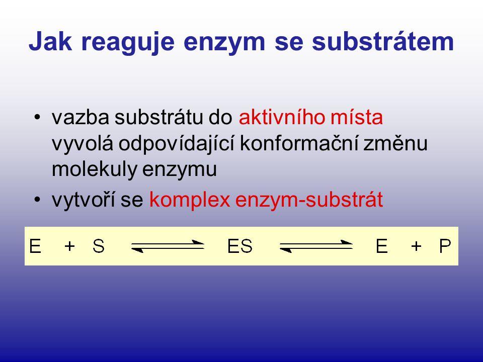 Jak reaguje enzym se substrátem