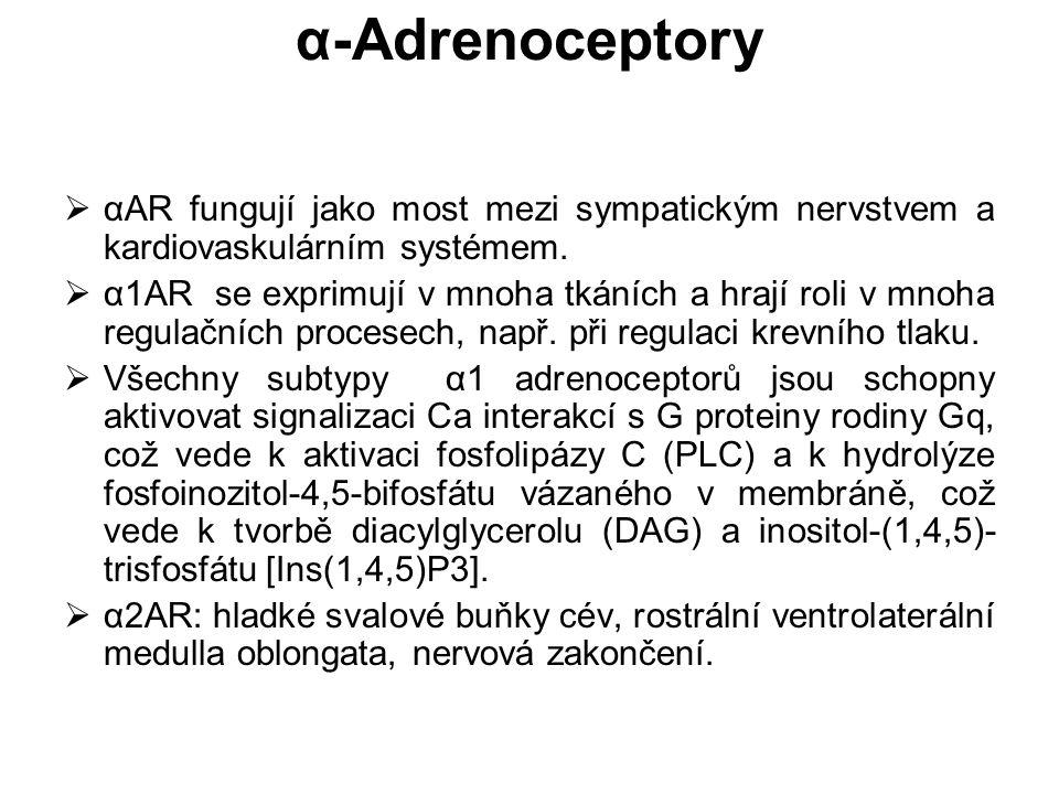 α-Adrenoceptory αAR fungují jako most mezi sympatickým nervstvem a kardiovaskulárním systémem.