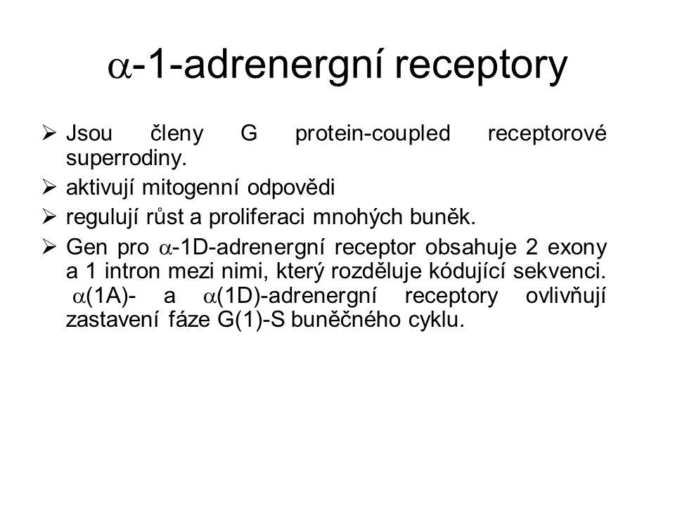 -1-adrenergní receptory