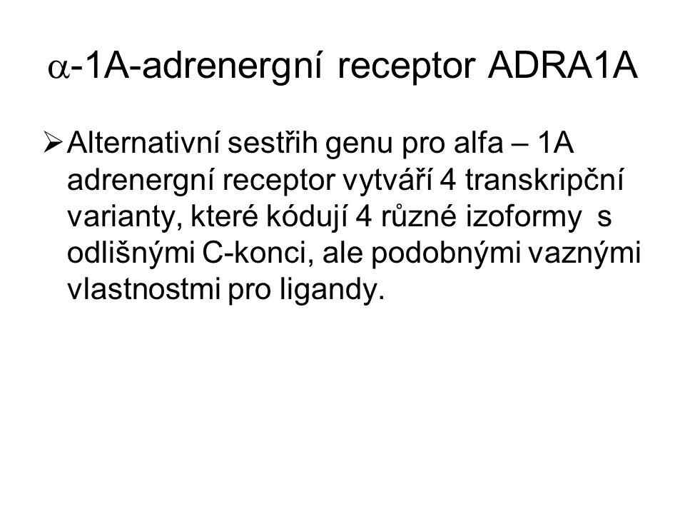 -1A-adrenergní receptor ADRA1A