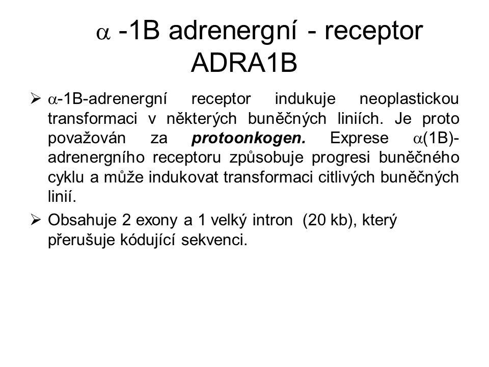  -1B adrenergní - receptor ADRA1B