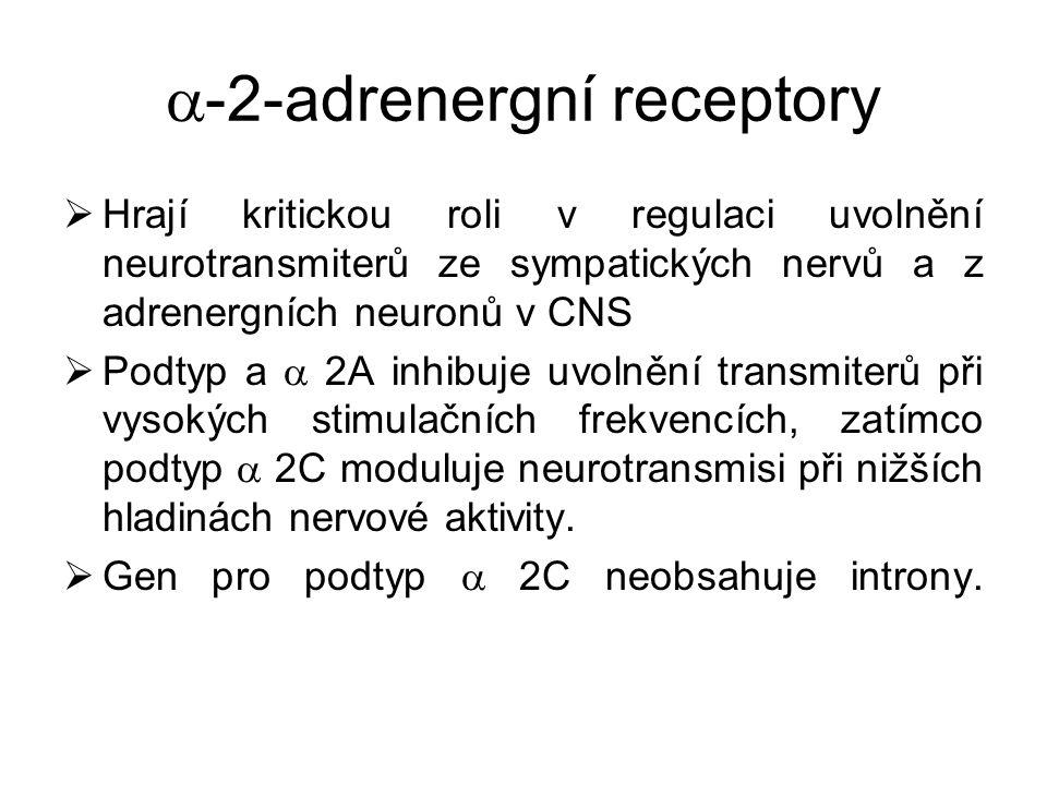 -2-adrenergní receptory