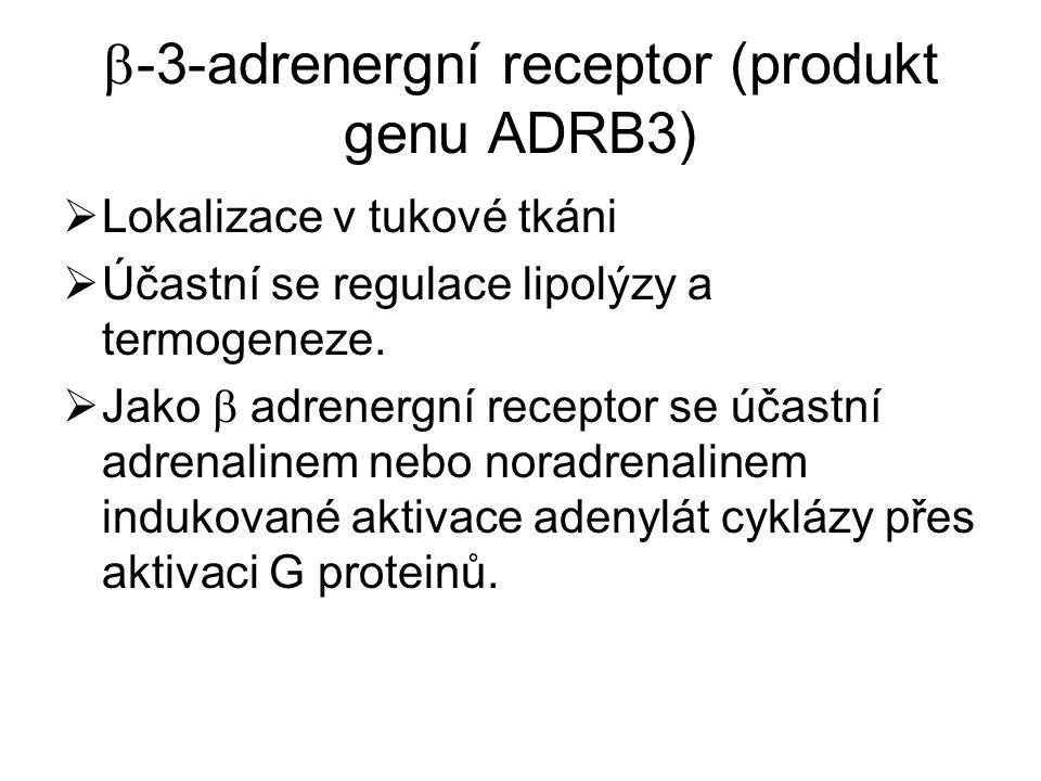 -3-adrenergní receptor (produkt genu ADRB3)