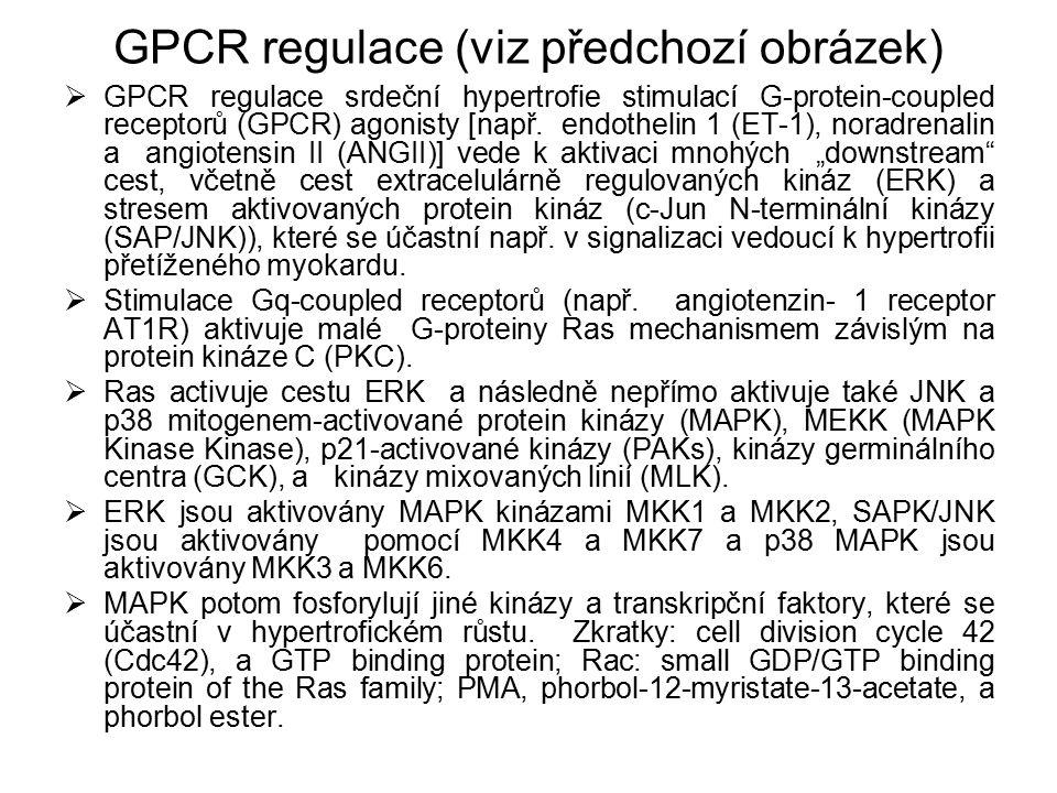GPCR regulace (viz předchozí obrázek)