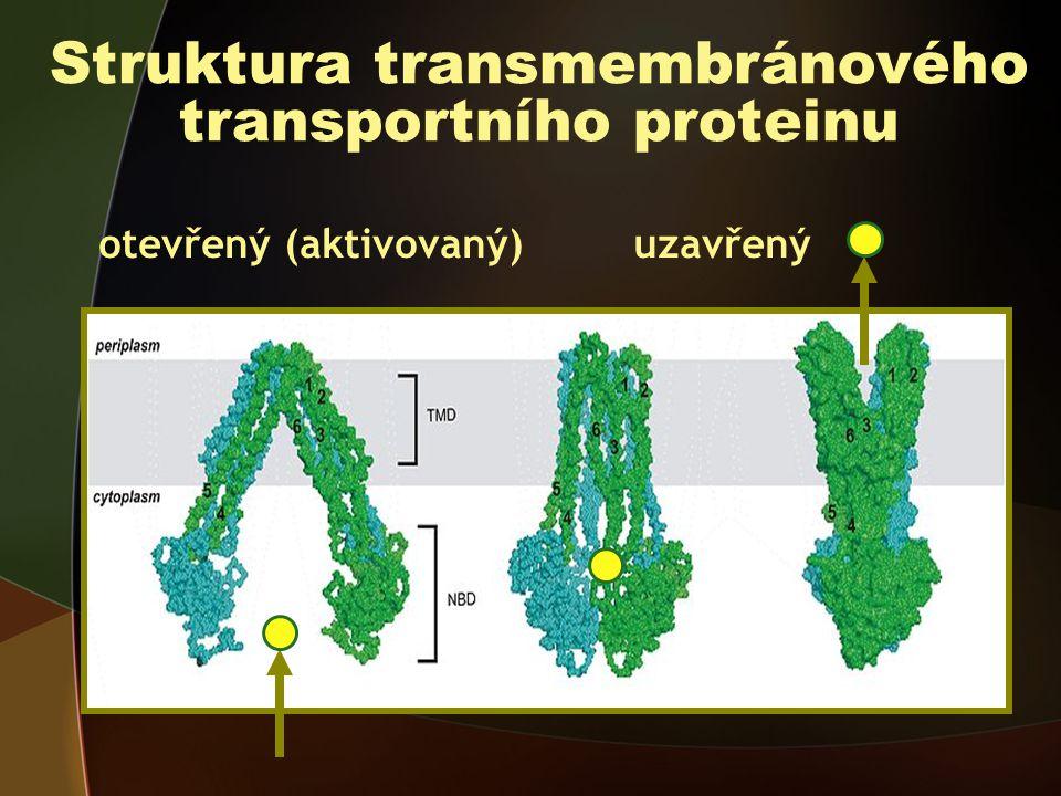 Struktura transmembránového transportního proteinu