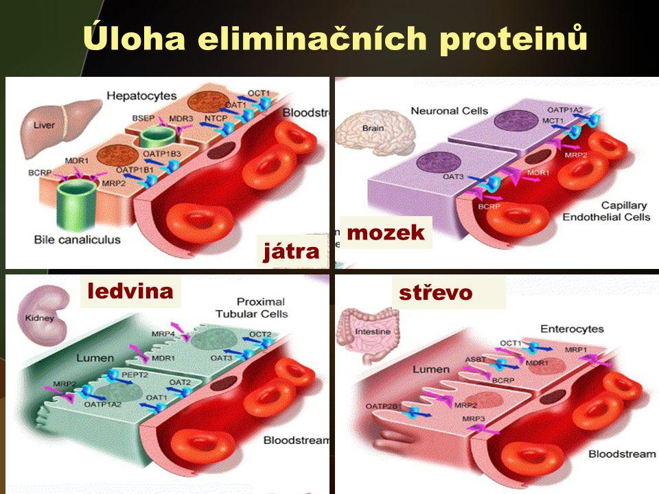Úloha eliminačních proteinů
