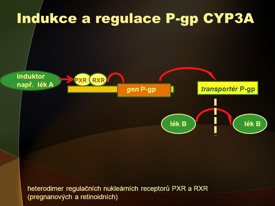 Indukce a regulace P-gp CYP3A
