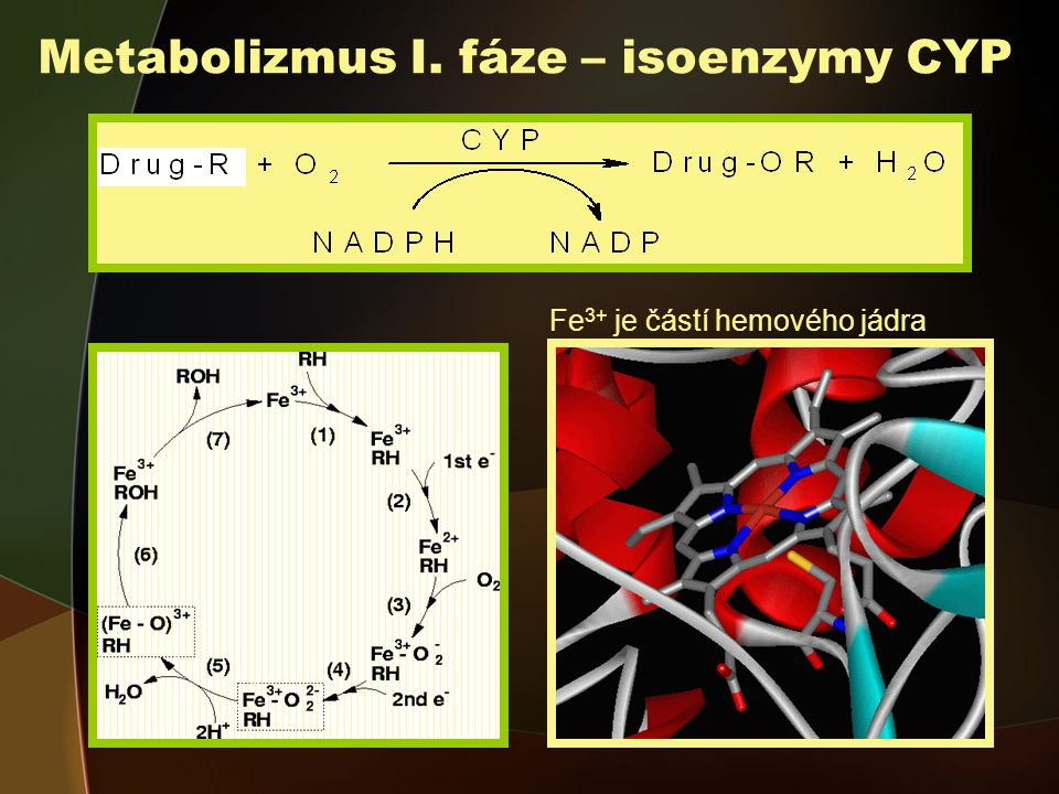 Metabolizmus I. fáze – isoenzymy CYP
