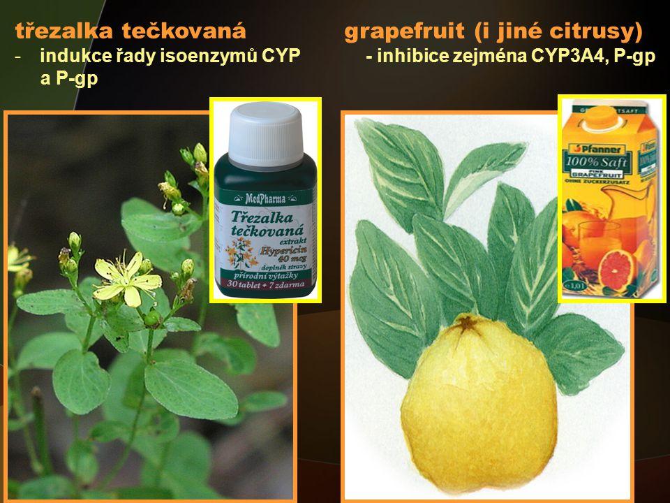 třezalka tečkovaná grapefruit (i jiné citrusy)