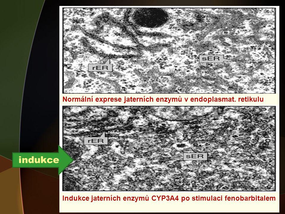indukce Normální exprese jaterních enzymů v endoplasmat. retikulu