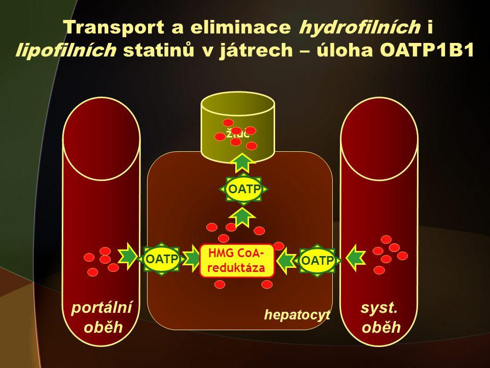 Transport a eliminace hydrofilních i lipofilních statinů v játrech – úloha OATP1B1