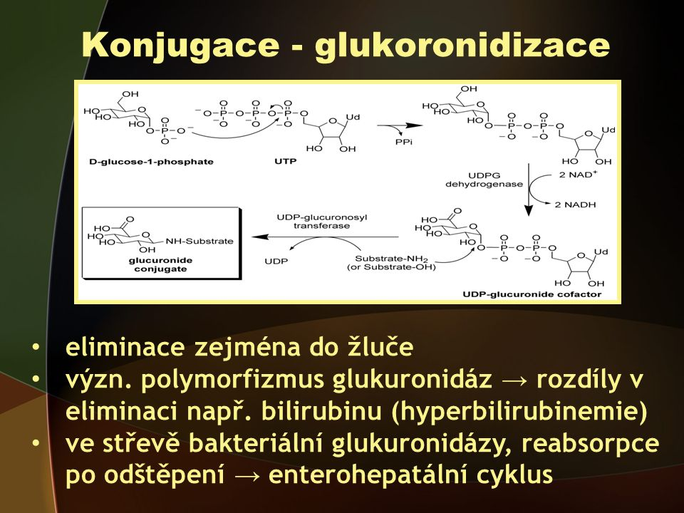 Konjugace - glukoronidizace