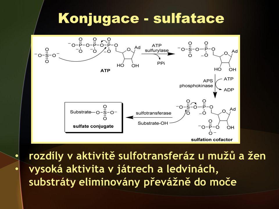 Konjugace - sulfatace rozdíly v aktivitě sulfotransferáz u mužů a žen