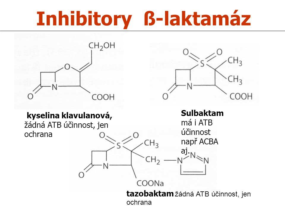 Inhibitory ß-laktamáz