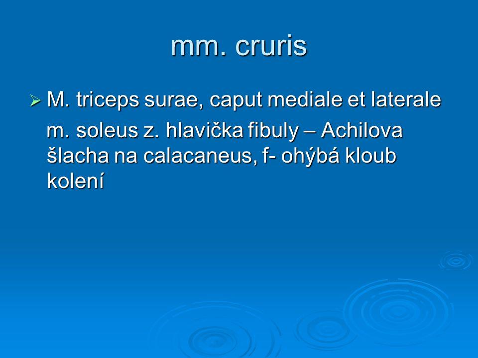 mm. cruris M. triceps surae, caput mediale et laterale