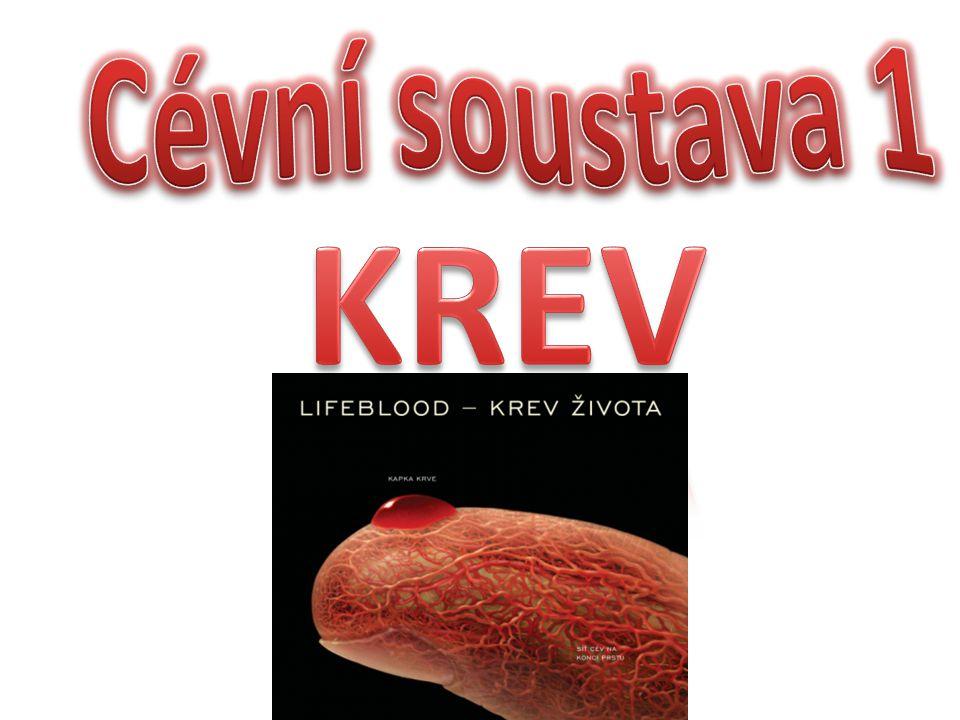 Cévní soustava 1 KREV
