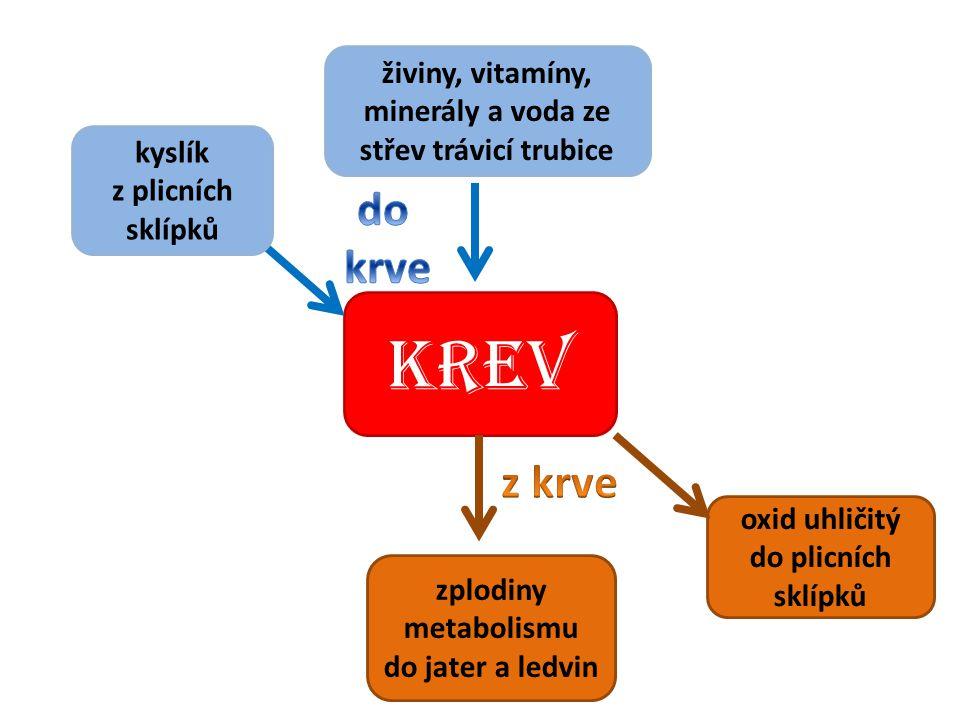 živiny, vitamíny, minerály a voda ze střev trávicí trubice
