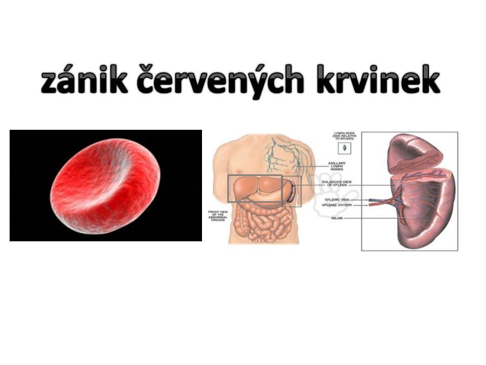 zánik červených krvinek