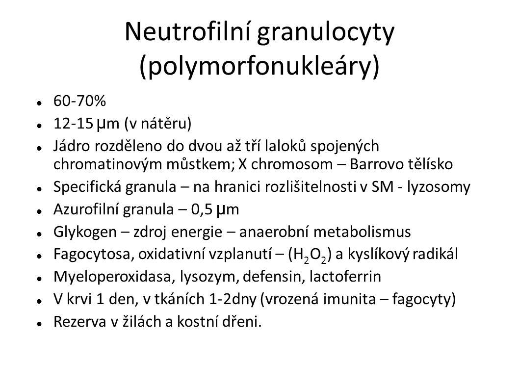 Neutrofilní granulocyty (polymorfonukleáry)