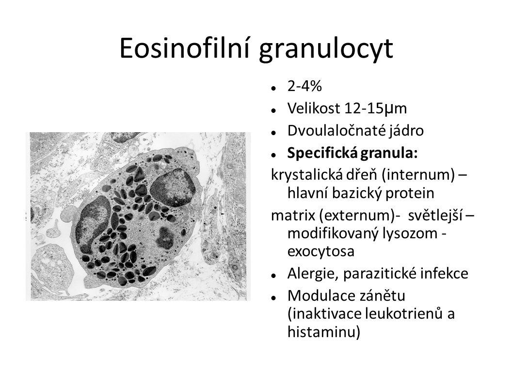 Eosinofilní granulocyt