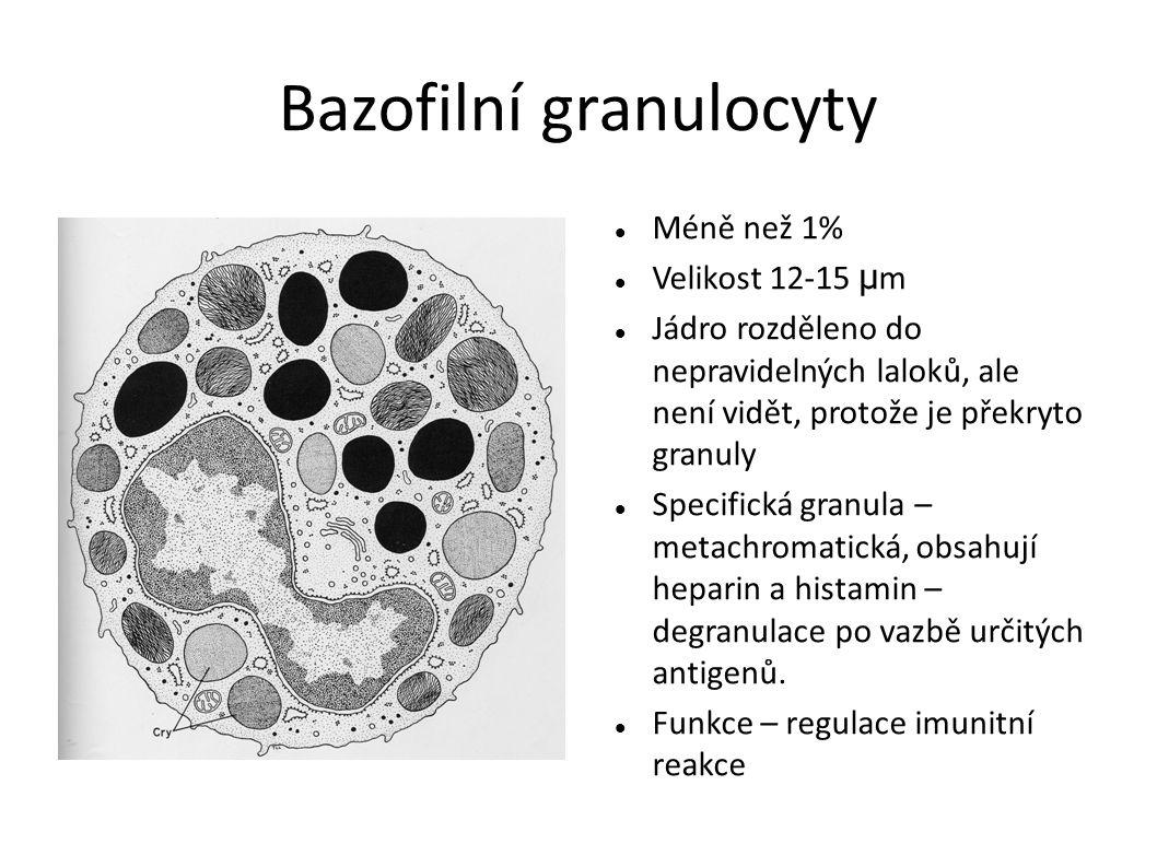 Bazofilní granulocyty