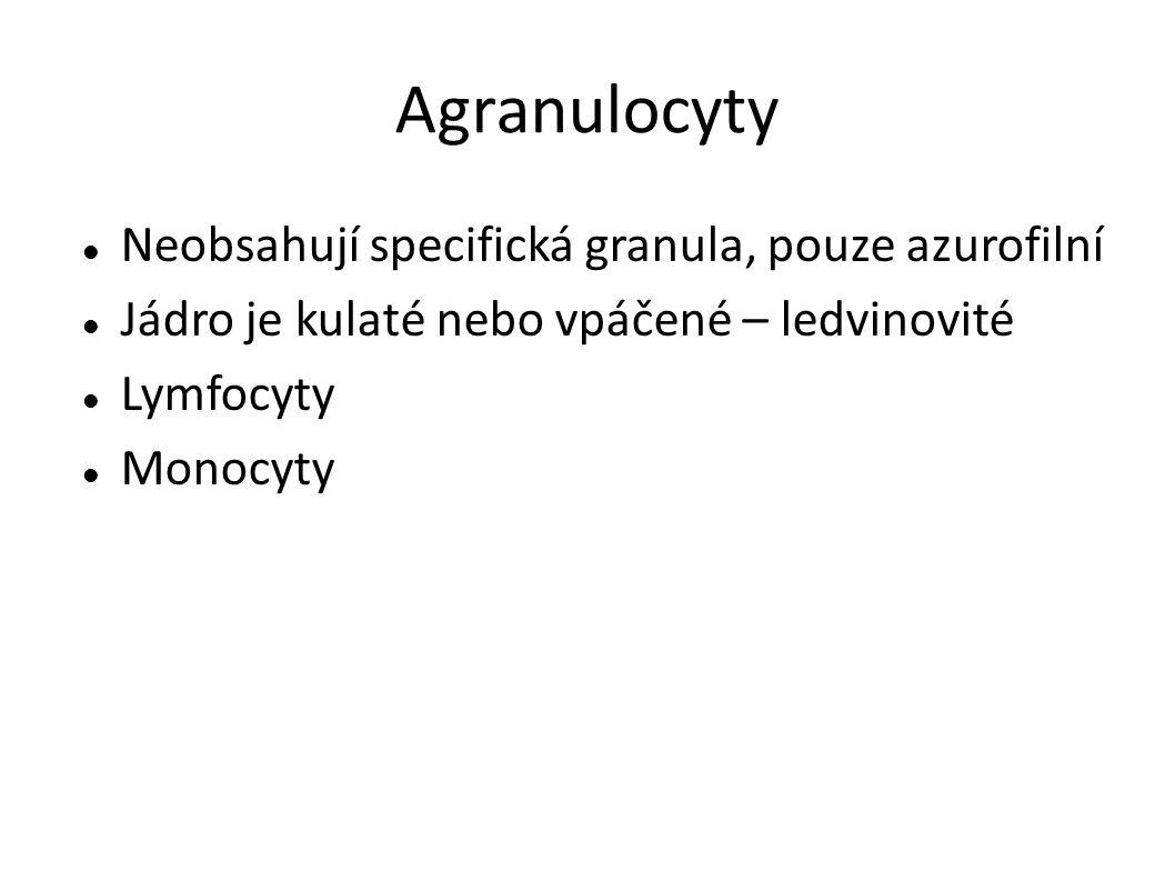 Agranulocyty Neobsahují specifická granula, pouze azurofilní