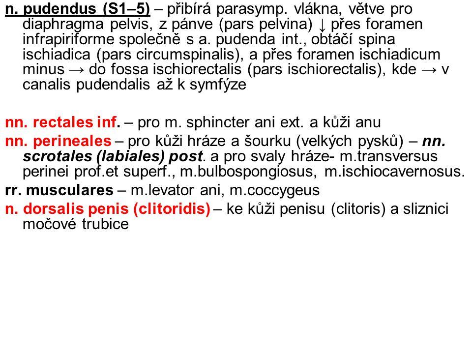 n. pudendus (S1–5) – přibírá parasymp