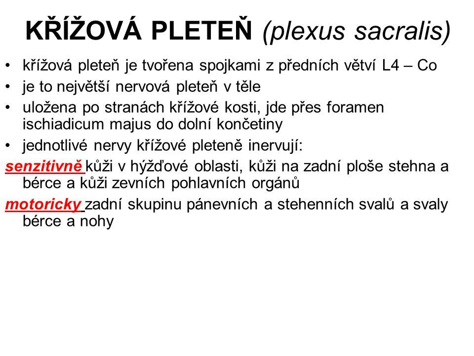 KŘÍŽOVÁ PLETEŇ (plexus sacralis)