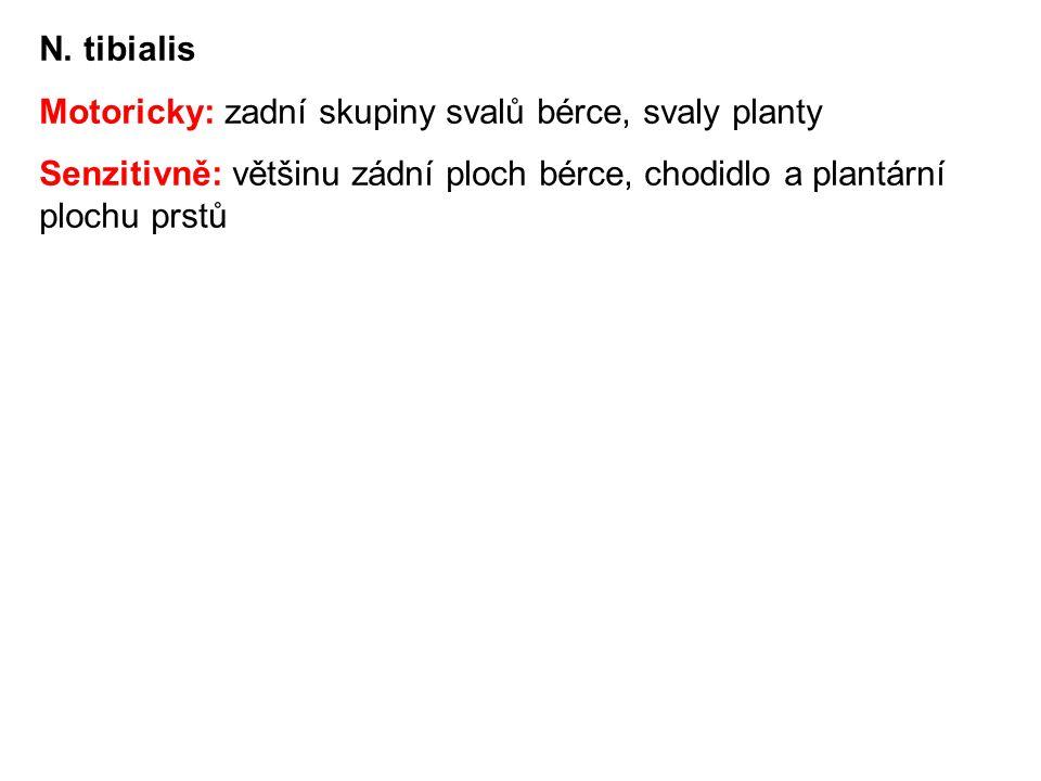 N. tibialis Motoricky: zadní skupiny svalů bérce, svaly planty.