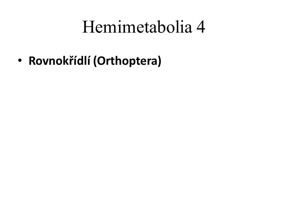 Hemimetabolia 4 Rovnokřídlí (Orthoptera)