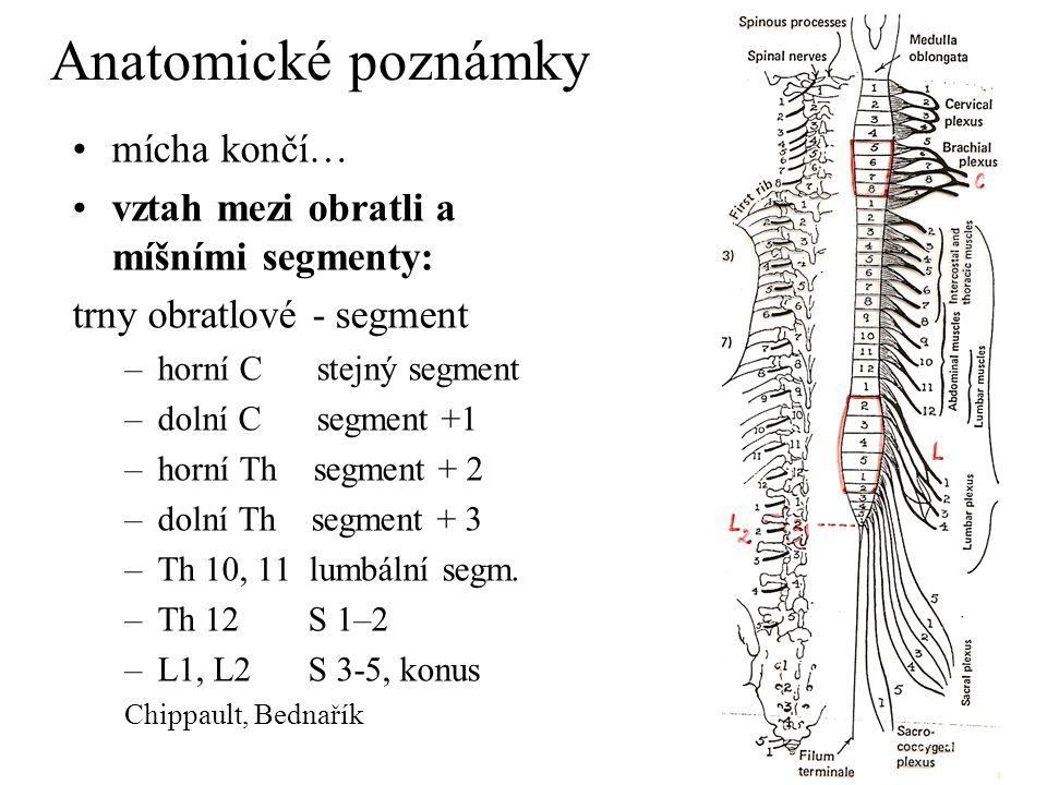 Anatomické poznámky mícha končí…