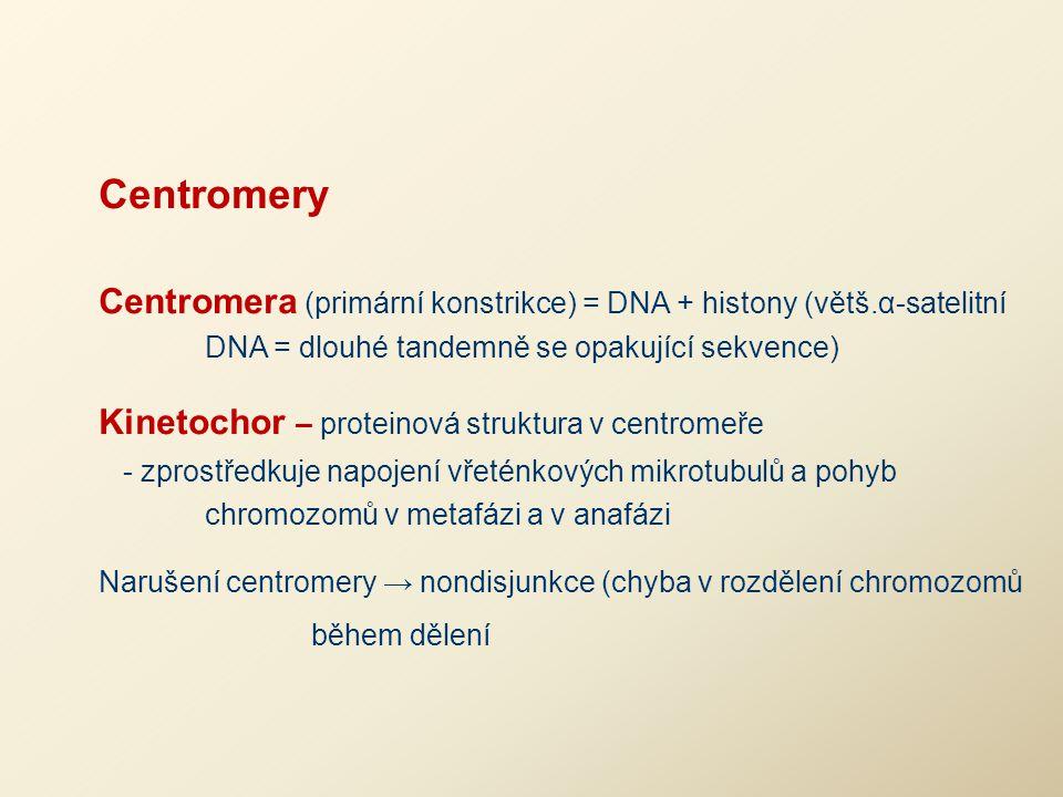Centromery Centromera (primární konstrikce) = DNA + histony (větš.α-satelitní DNA = dlouhé tandemně se opakující sekvence)