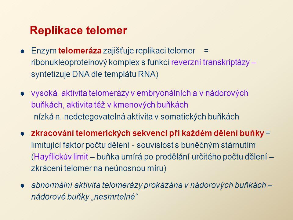 Replikace telomer