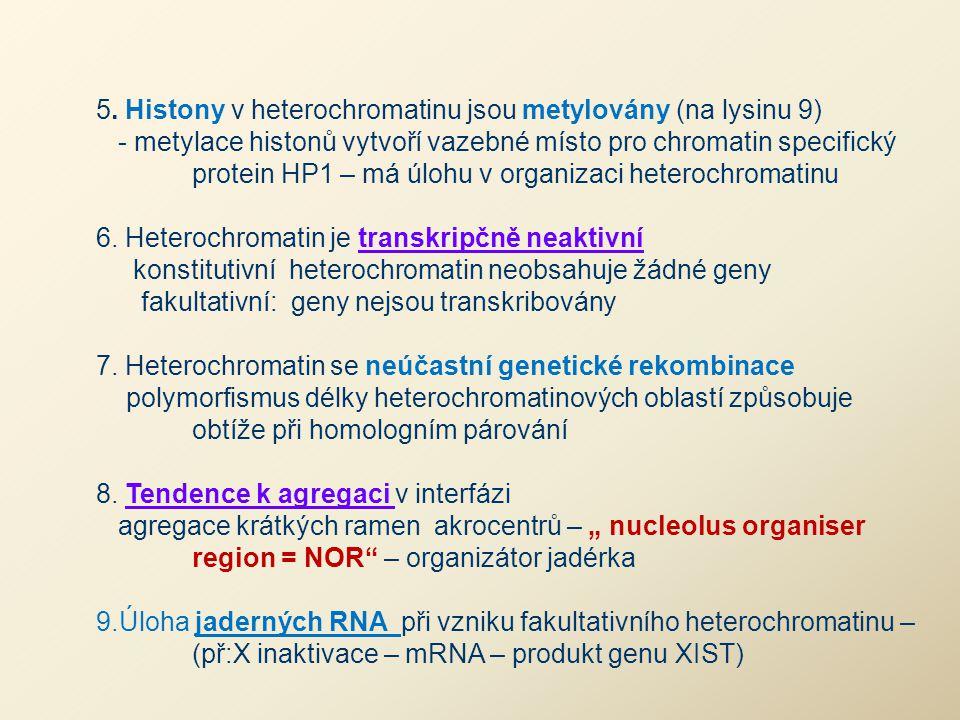 5. Histony v heterochromatinu jsou metylovány (na lysinu 9)
