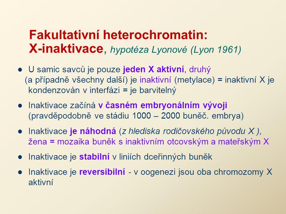 Fakultativní heterochromatin: X-inaktivace, hypotéza Lyonové (Lyon 1961)
