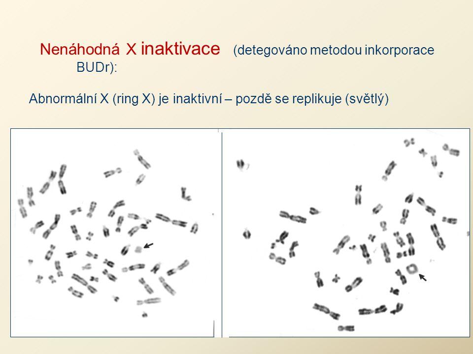 Nenáhodná X inaktivace (detegováno metodou inkorporace BUDr):
