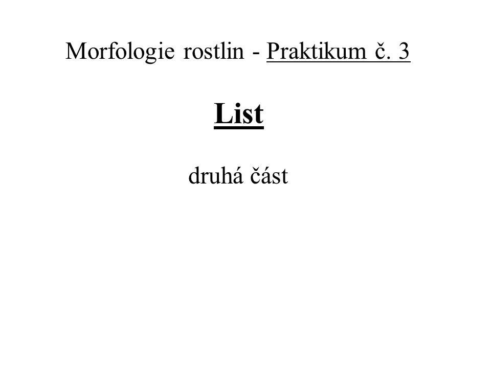 Morfologie rostlin - Praktikum č. 3