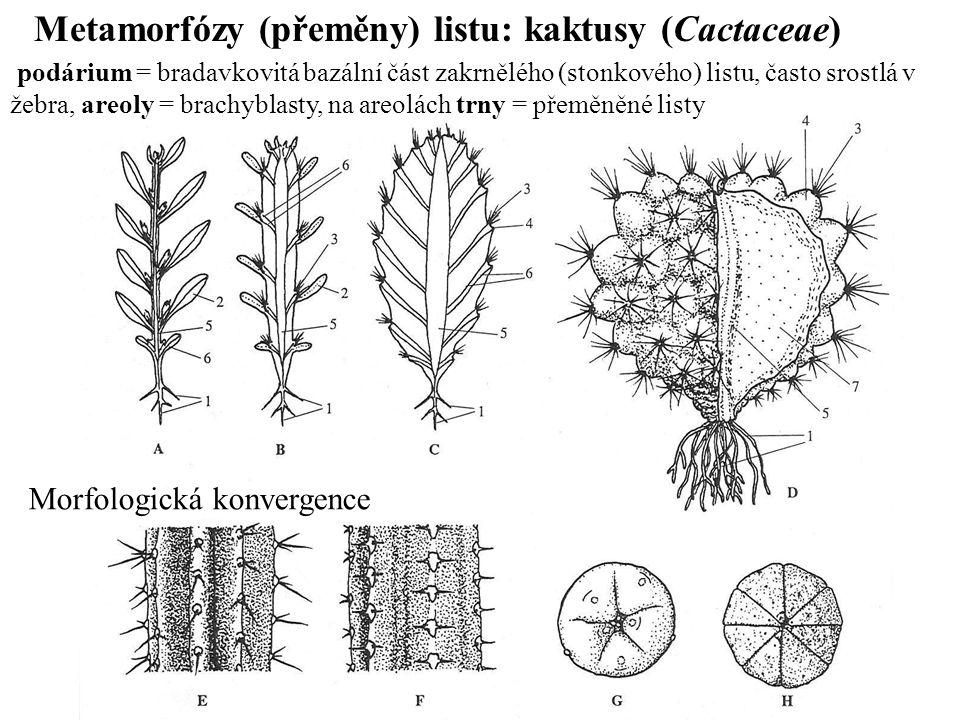 Metamorfózy (přeměny) listu: kaktusy (Cactaceae)