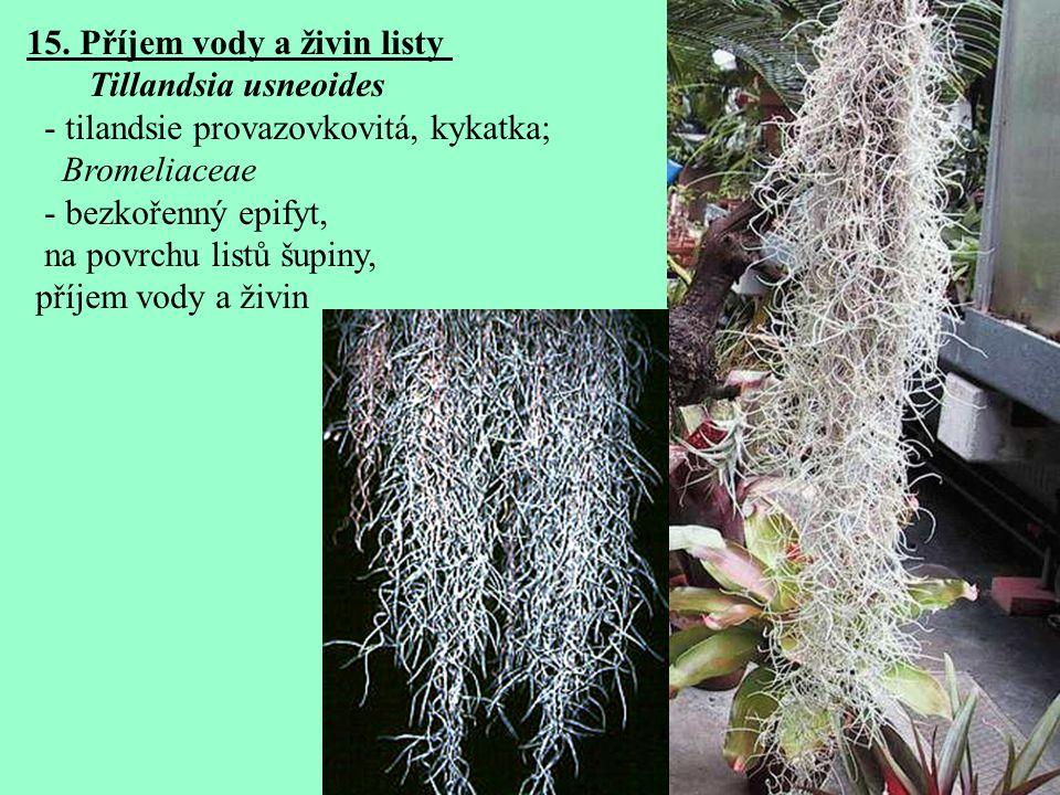 15. Příjem vody a živin listy