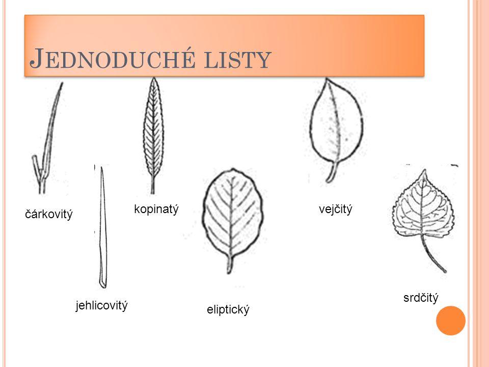 Jednoduché listy kopinatý vejčitý čárkovitý srdčitý jehlicovitý