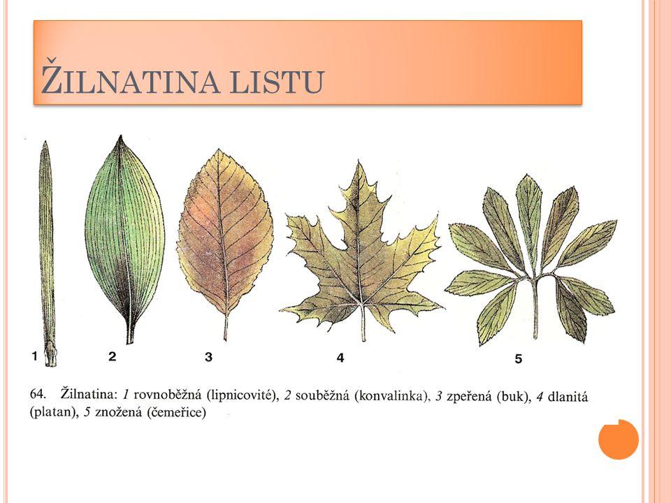 Žilnatina listu