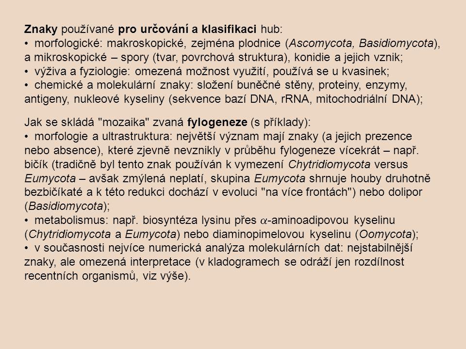 Znaky používané pro určování a klasifikaci hub: • morfologické: makroskopické, zejména plodnice (Ascomycota, Basidiomycota), a mikroskopické – spory (tvar, povrchová struktura), konidie a jejich vznik; • výživa a fyziologie: omezená možnost využití, používá se u kvasinek; • chemické a molekulární znaky: složení buněčné stěny, proteiny, enzymy, antigeny, nukleové kyseliny (sekvence bazí DNA, rRNA, mitochodriální DNA); Jak se skládá mozaika zvaná fylogeneze (s příklady): • morfologie a ultrastruktura: největší význam mají znaky (a jejich prezence nebo absence), které zjevně nevznikly v průběhu fylogeneze vícekrát – např.