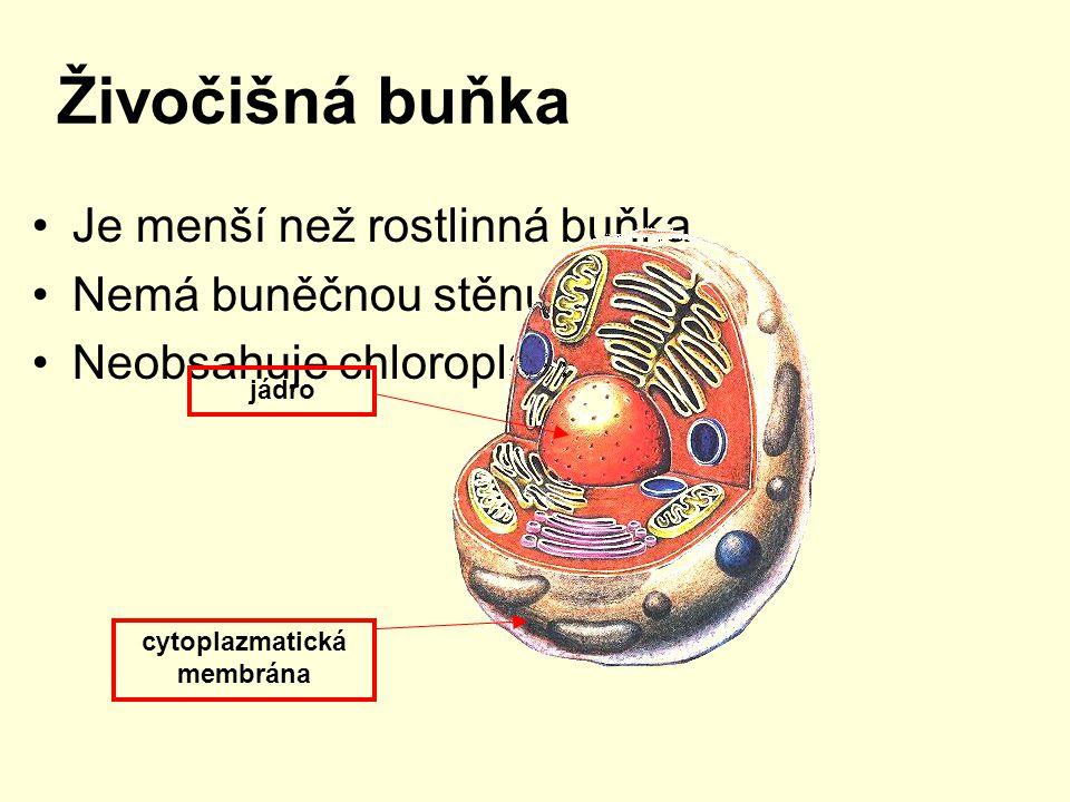 cytoplazmatická membrána