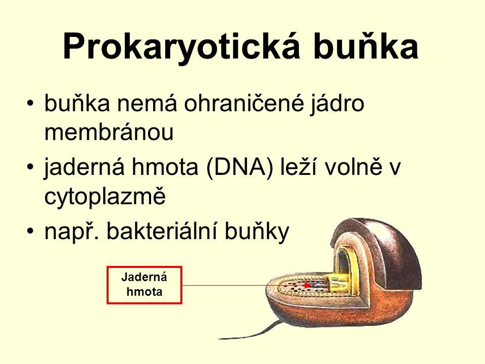 Prokaryotická buňka buňka nemá ohraničené jádro membránou