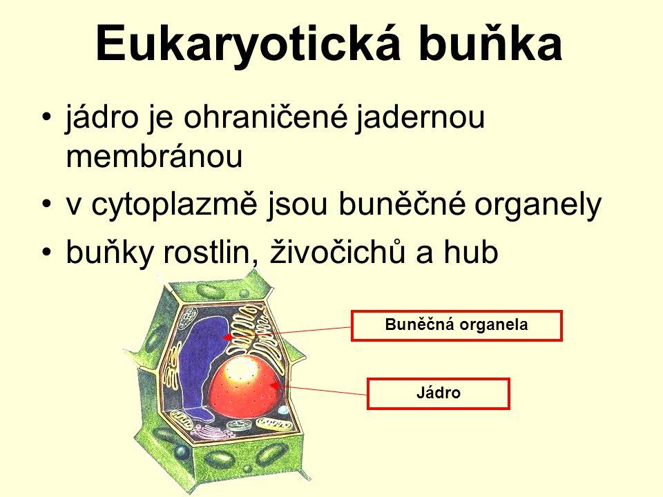 Eukaryotická buňka jádro je ohraničené jadernou membránou