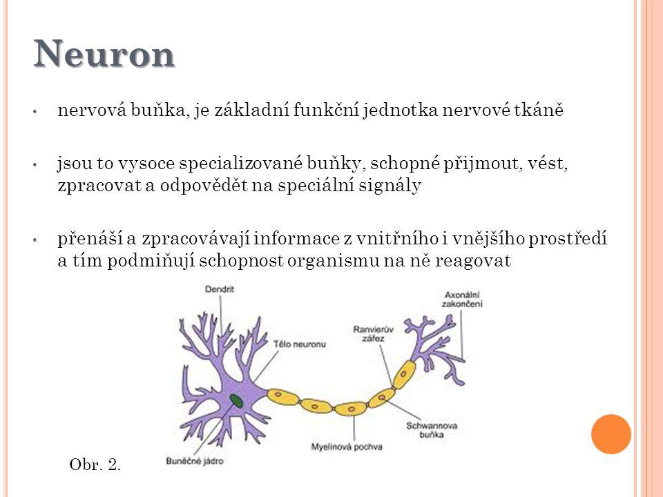 Neuron nervová buňka, je základní funkční jednotka nervové tkáně