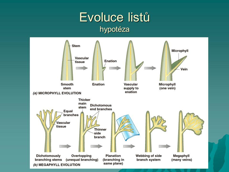 Evoluce listů hypotéza