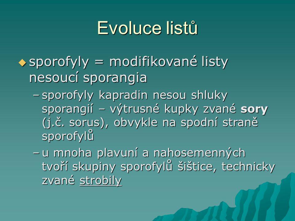 Evoluce listů sporofyly = modifikované listy nesoucí sporangia